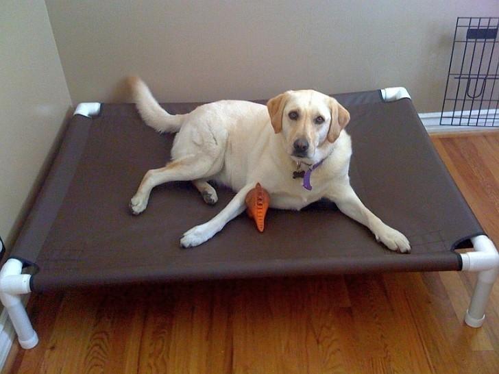 pvc-dog-bed-728x546