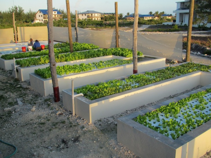 Aquaponics System in the Bahamas