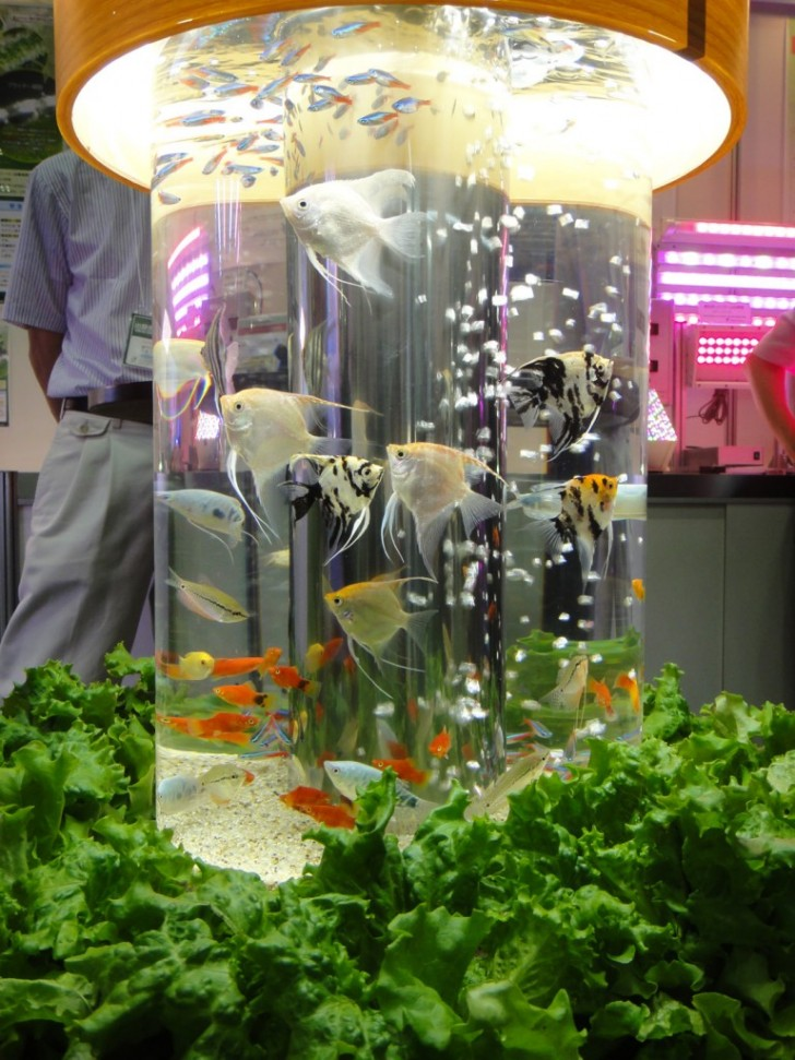 Beautiful Aquaponics