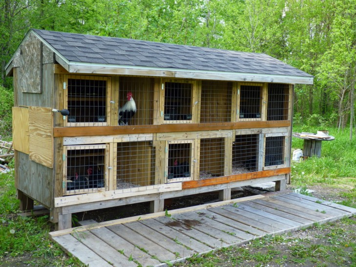 14 ingenious chicken coop plans & designs