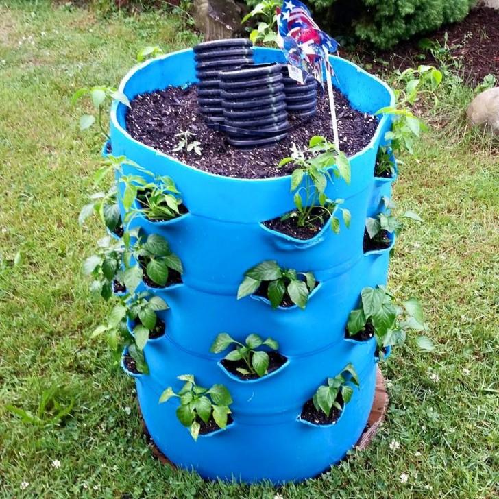 55 Gallon Drum Garden