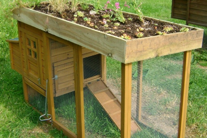 Plans For Building Your Own Chicken Coop