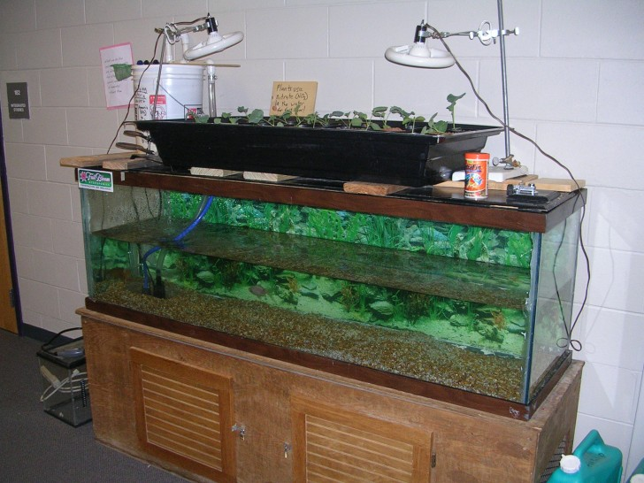 DIY Aquaponics with Lights