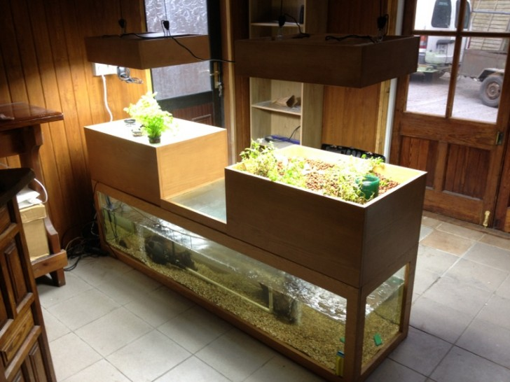 Indoor Aquaponics with Trout