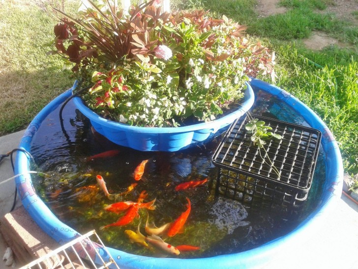 Kiddie Pool Aquaponics