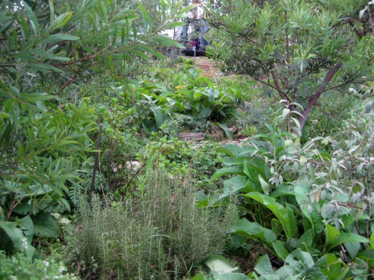 Constructed Wetland for Water Filtering