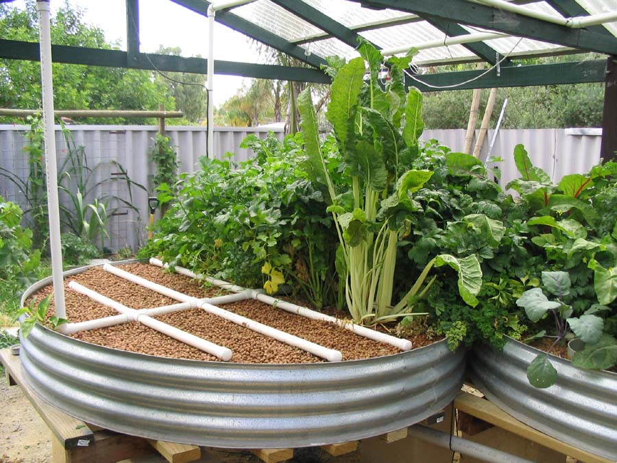 11 Amazing Food Producing Aquaponics Systems
