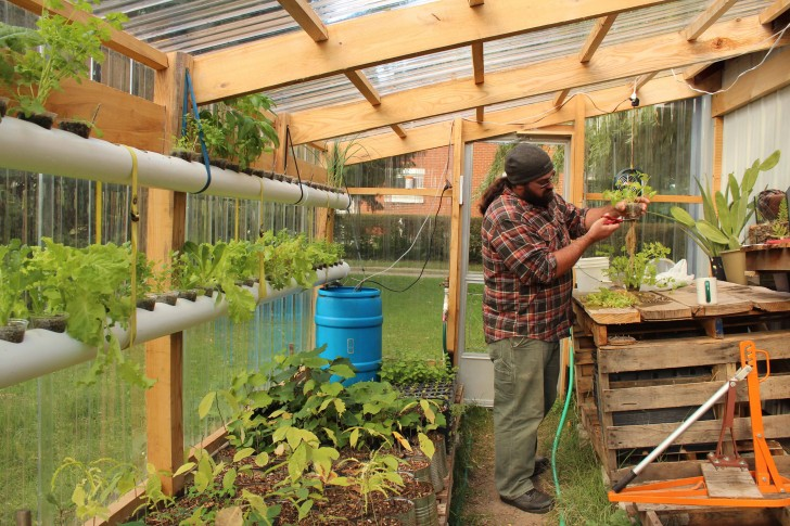 Aquaponics in Michigan