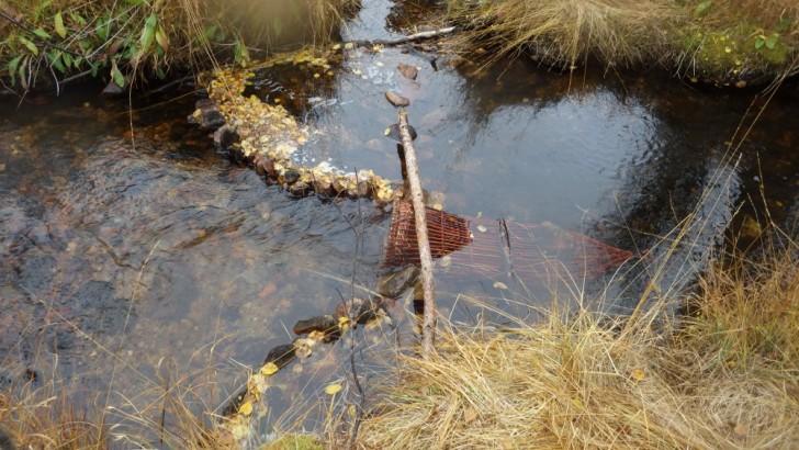 Simple Survival Fishing Traps