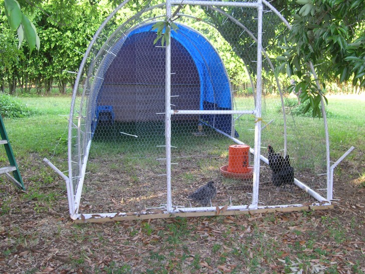 PVC Chicken Projects