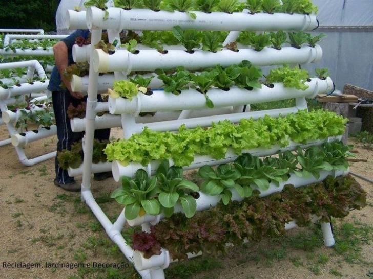Hydroponic PVC Garden Project