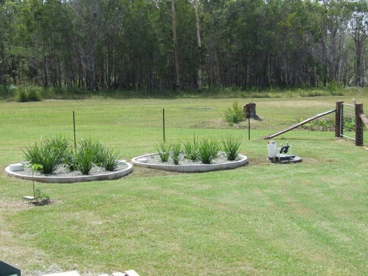 Reed Beds in Lawn