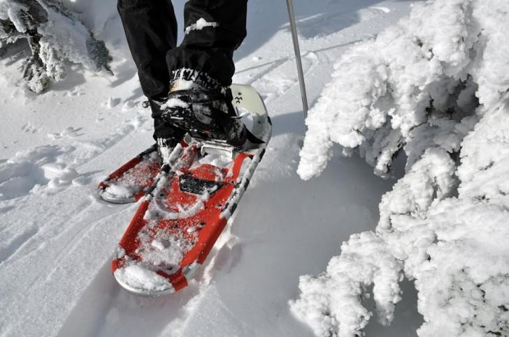 Winter Snowshoes Survival