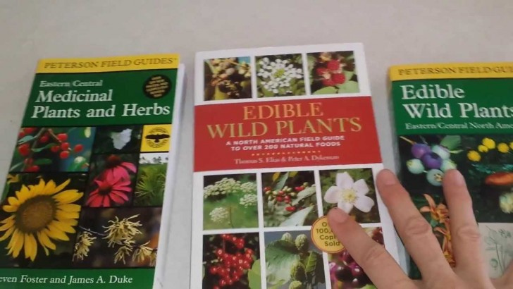 Wild Plants You Can Eat Resources