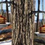 12 Trees for Harvesting Natural Syrup