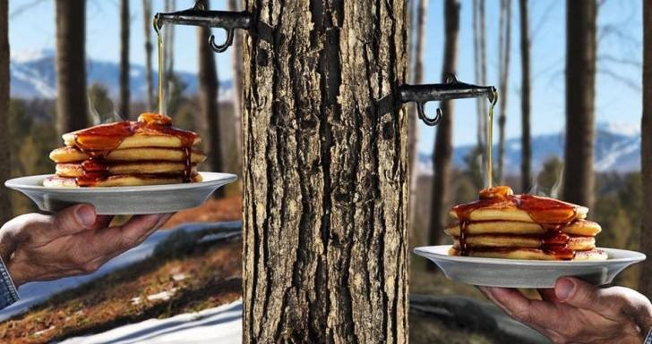 How to Tap a Syrup Tree