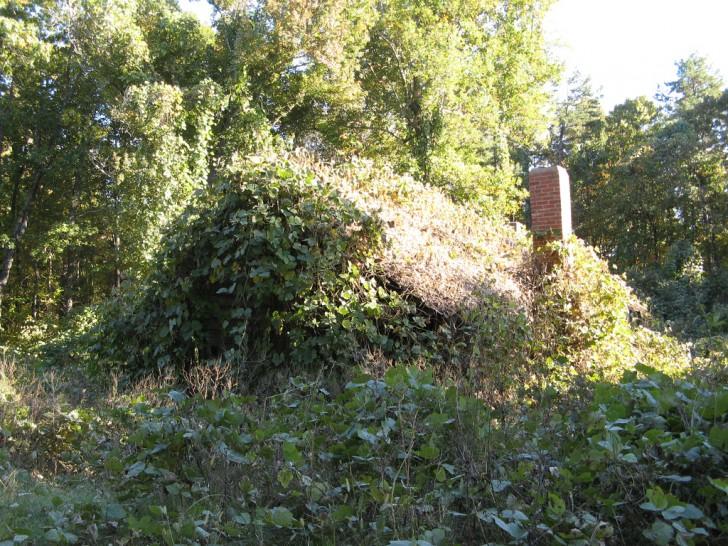 Camouflaged Home with Kudzu